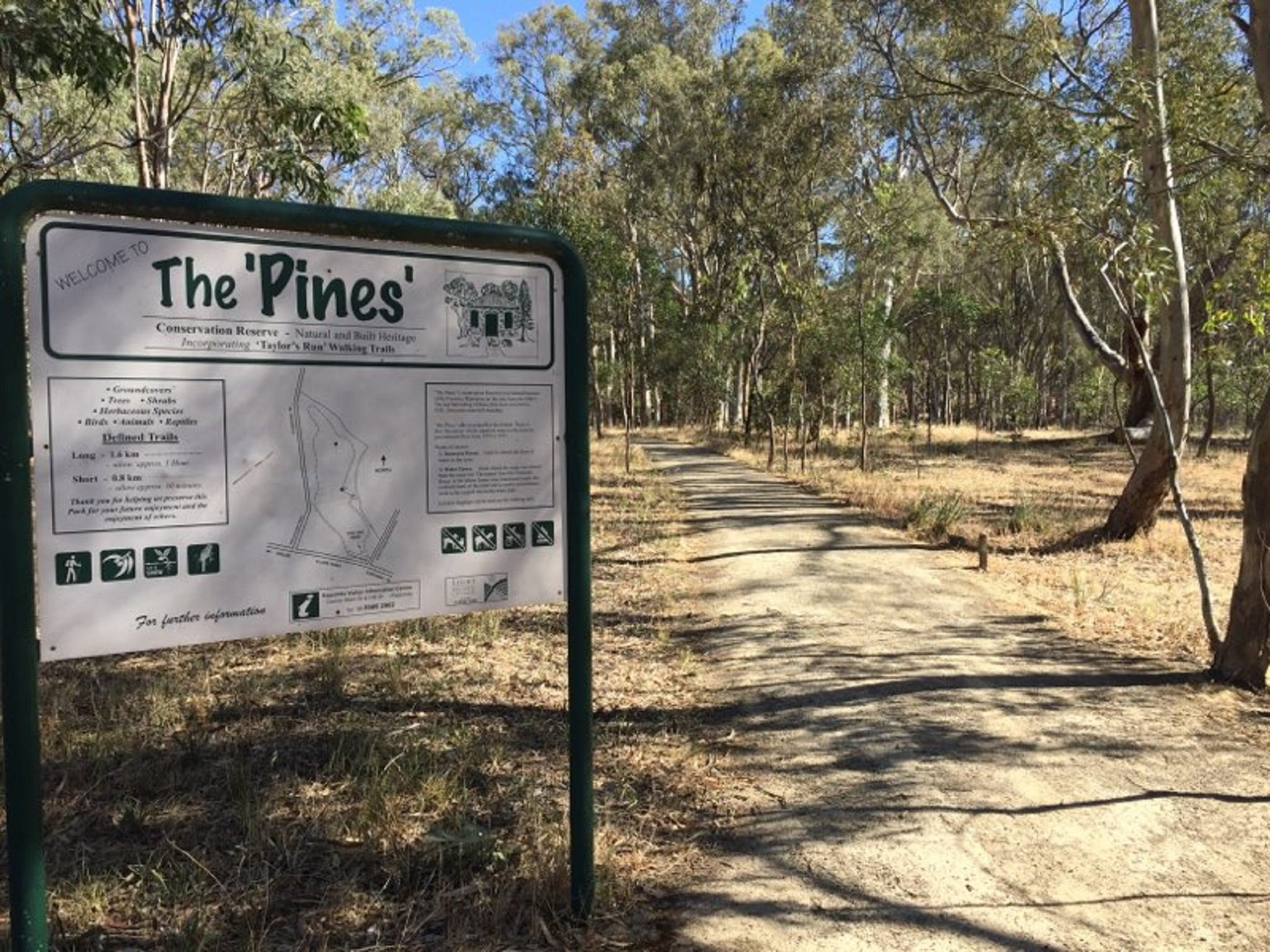The Pines Conservation Reserve - Accommodation in Brisbane