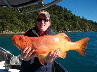 Gone Fishing by Coral Sea Fishing Charters Airlie Beach - Accommodation in Brisbane