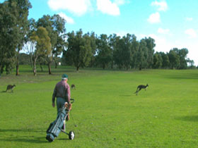 Coffin Bay Golf Club - Accommodation in Brisbane