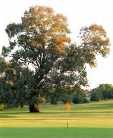 Cowra Golf Club - Accommodation in Brisbane