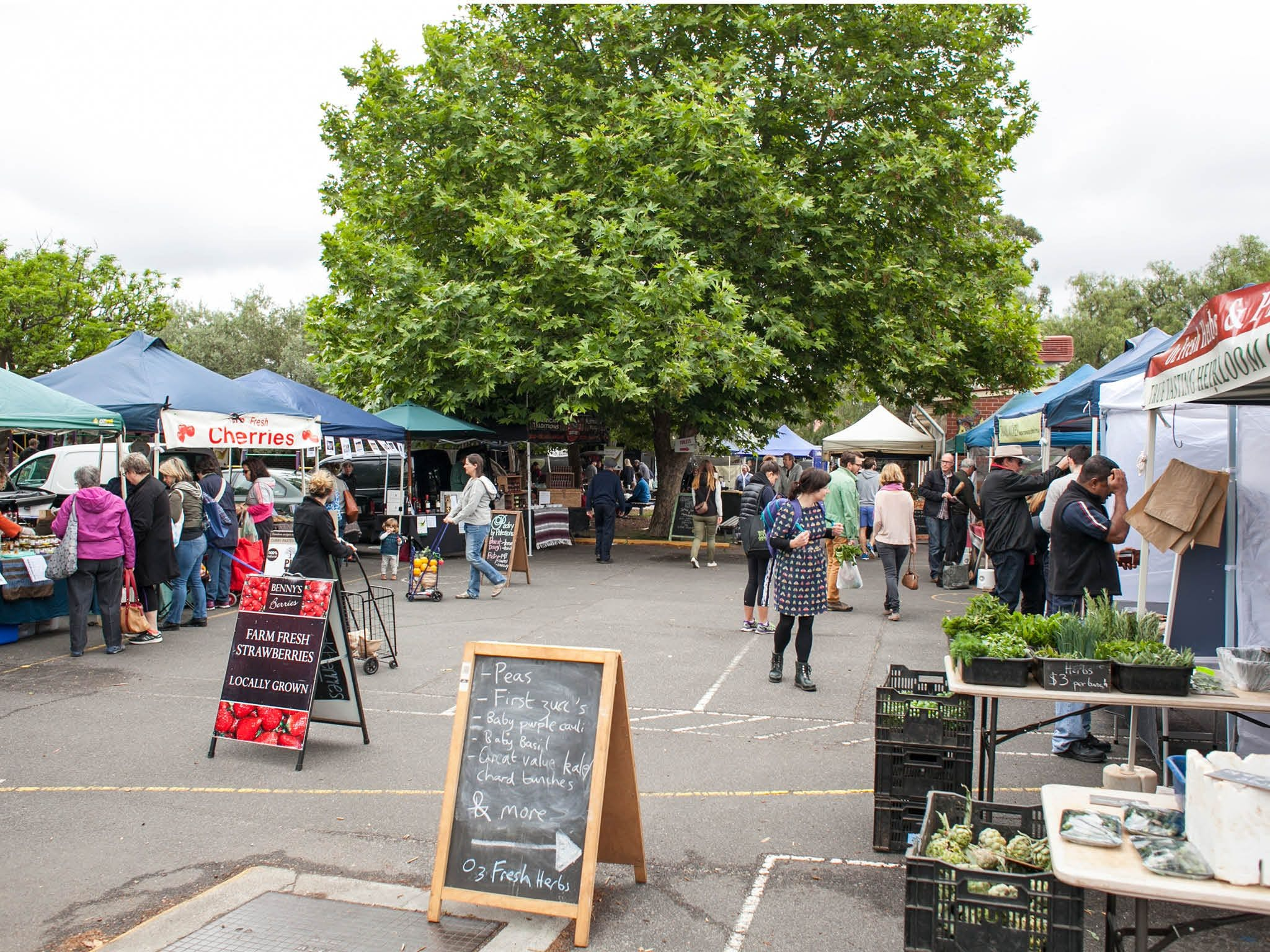 Alphington Farmers' Market - Accommodation in Brisbane