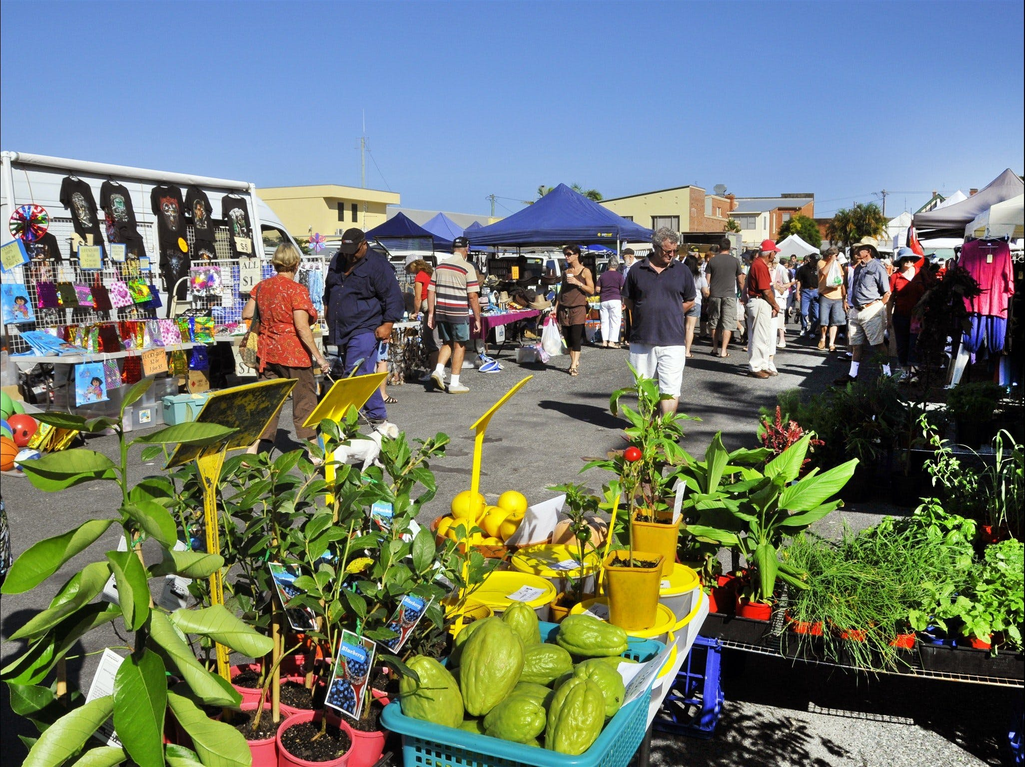 Maclean Community Monthly Markets - Accommodation in Brisbane