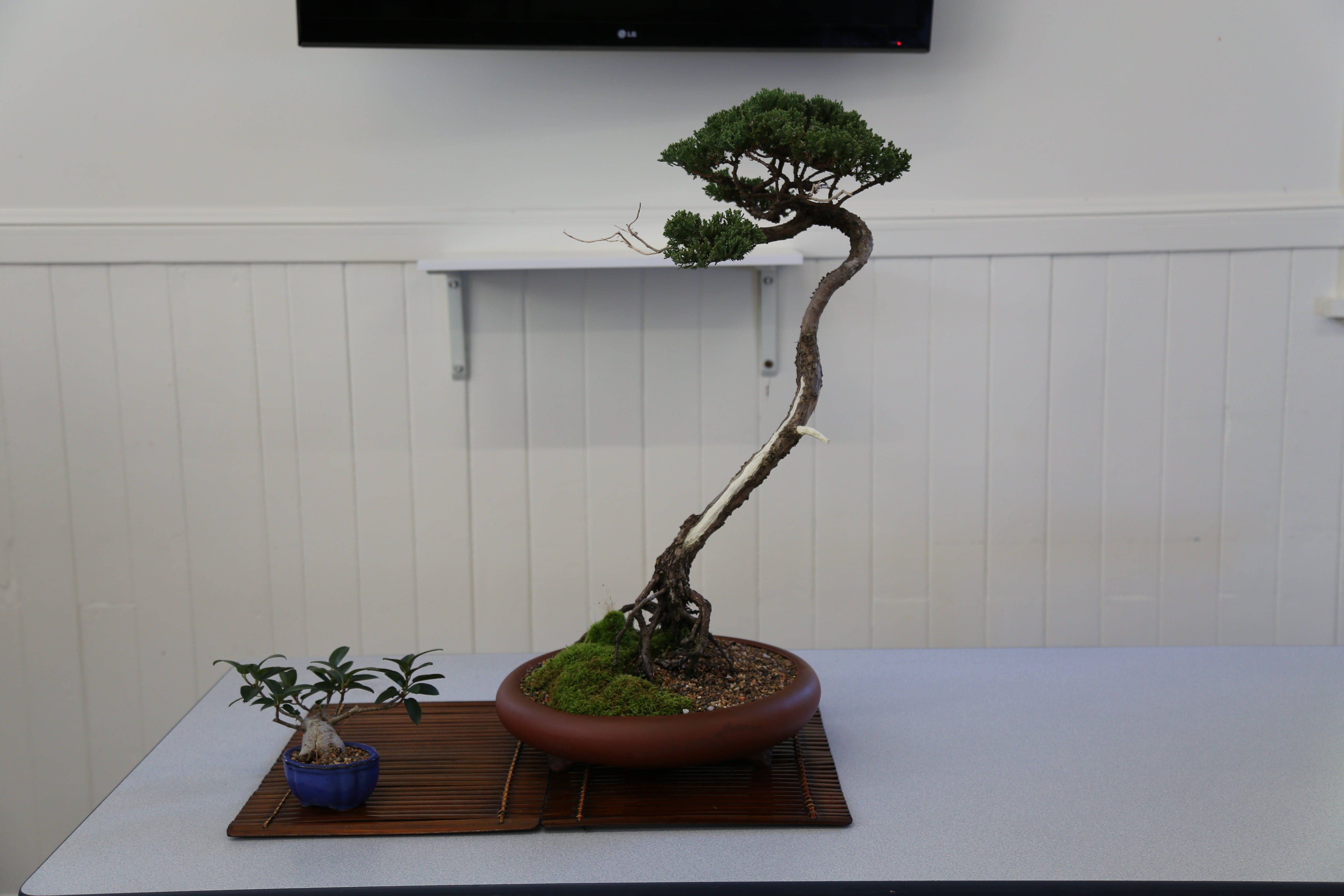 Wauchope Bonsai Workshop Group - Accommodation in Brisbane