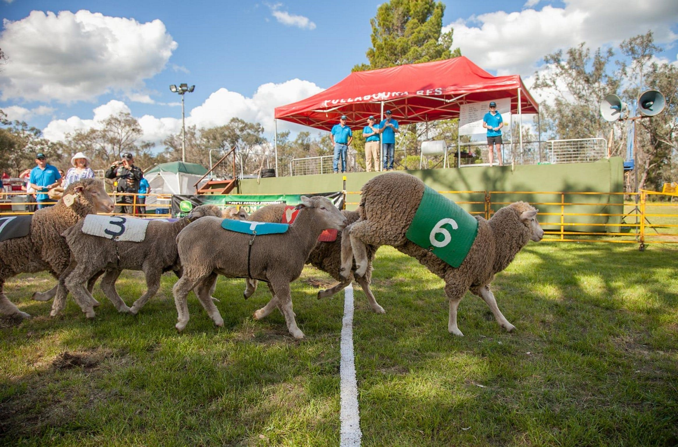 Caragabal Sheep Races - Accommodation in Brisbane