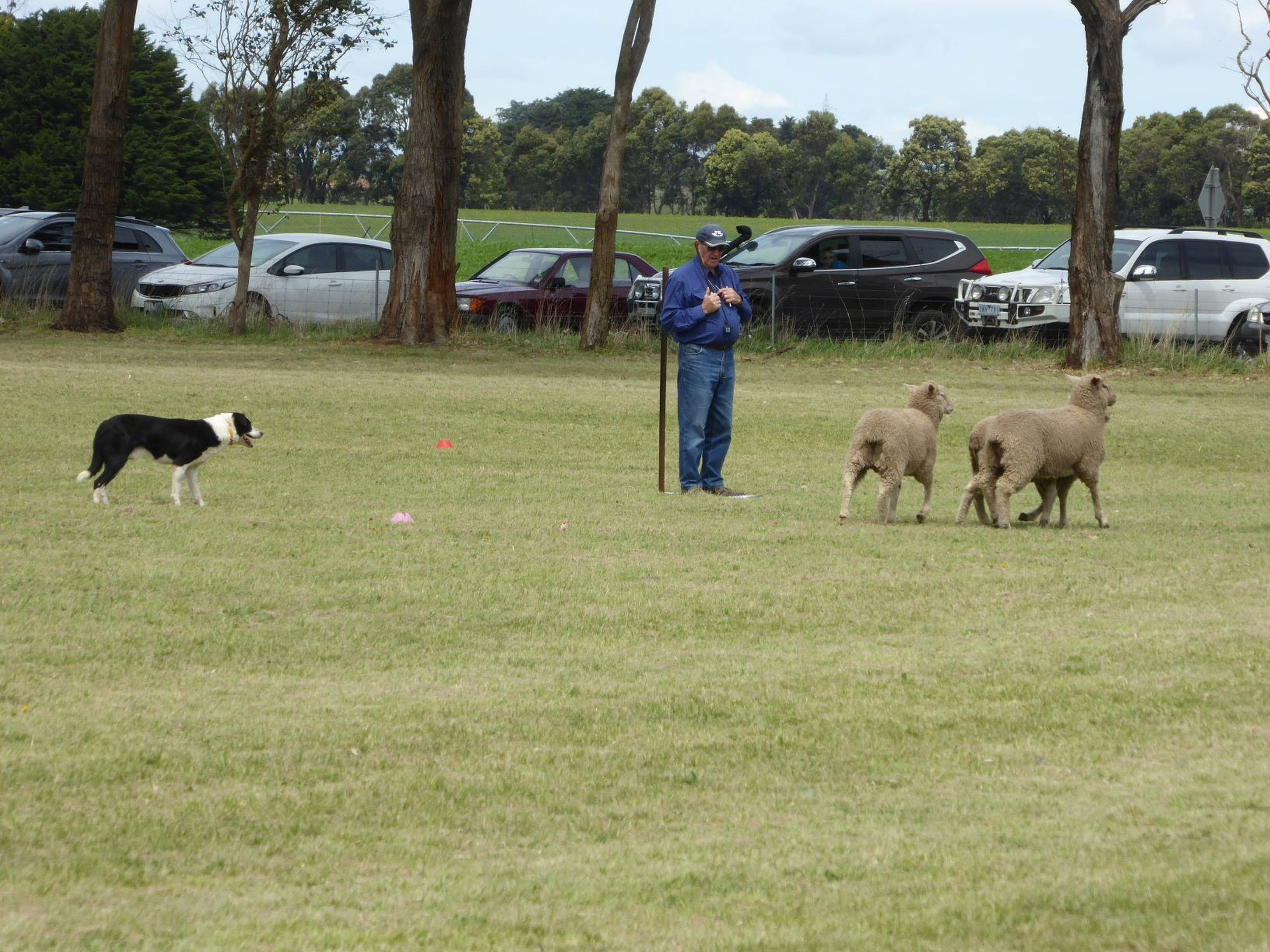 Dean Sheepdog Trials - Old Sniff Classic - Accommodation in Brisbane