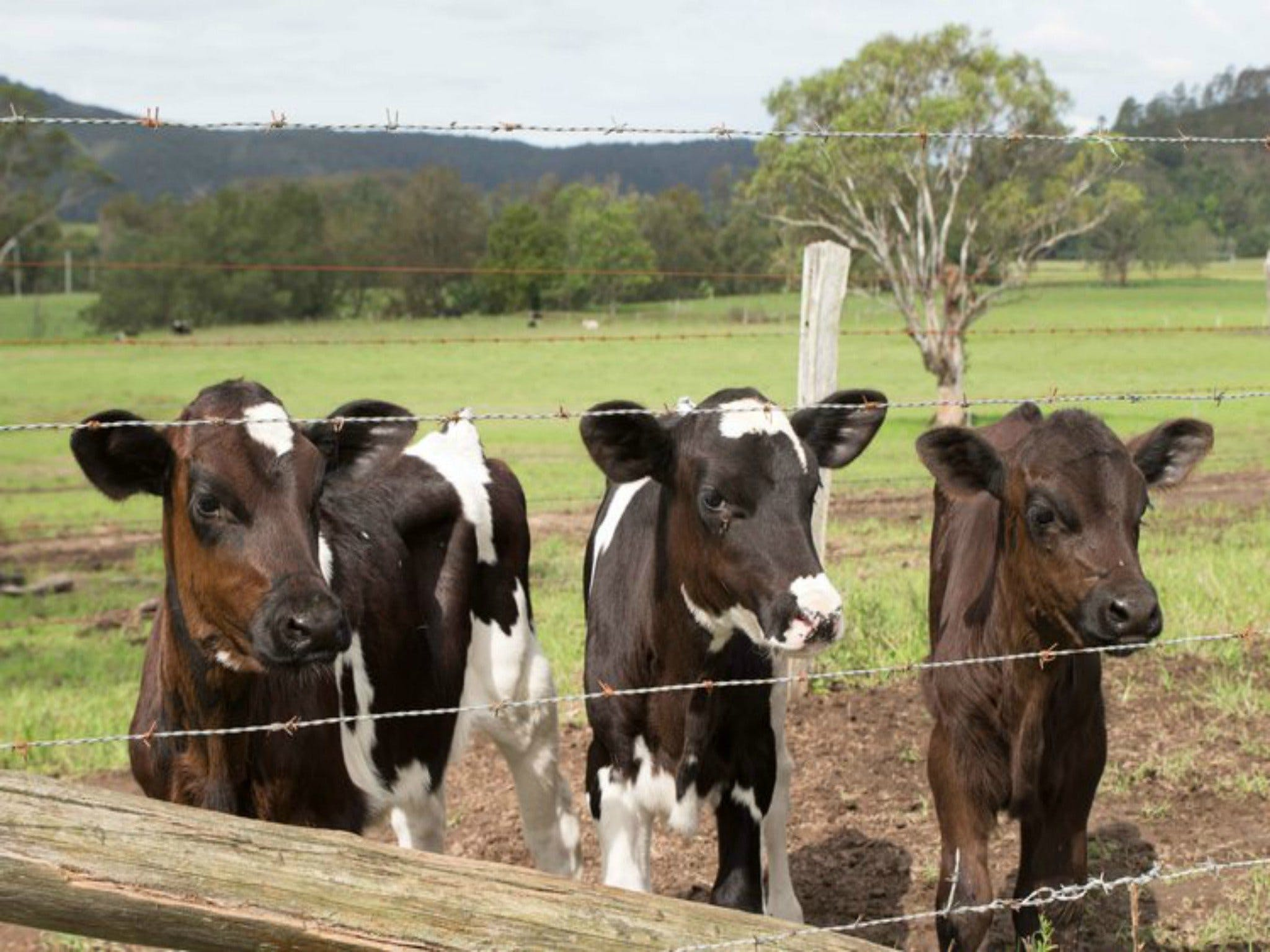 Bandon Grove Farm Tours - Accommodation in Brisbane