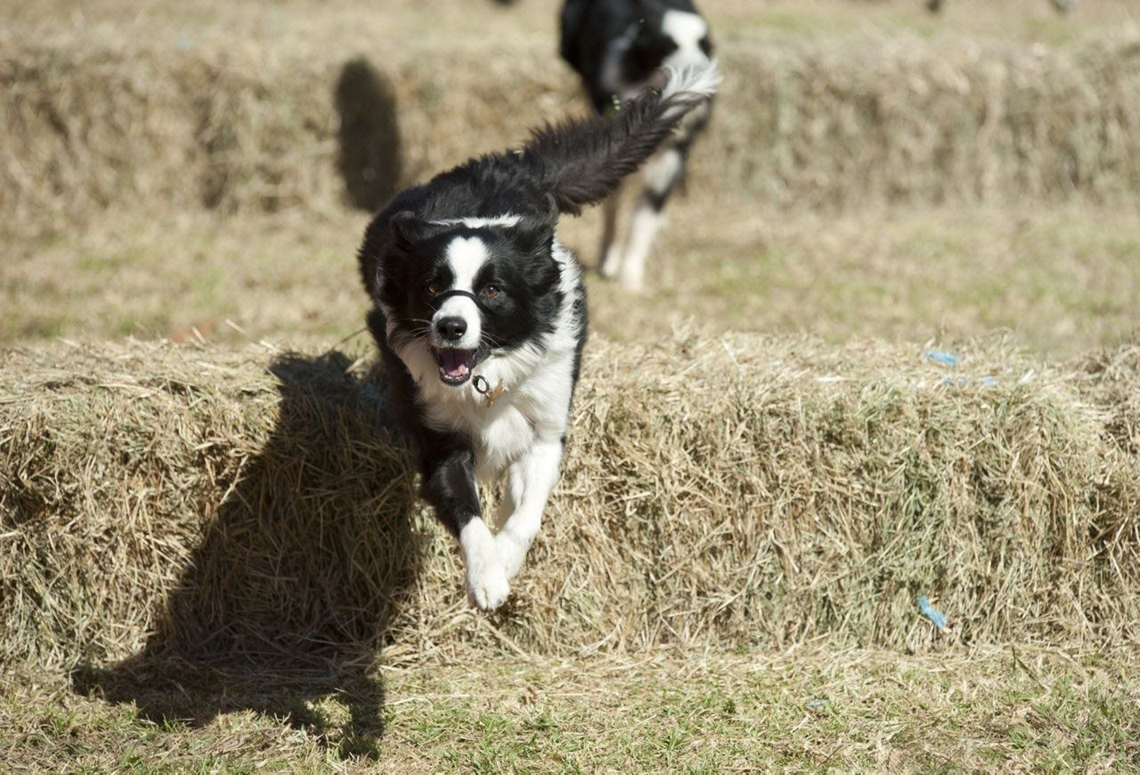 Great Nundle Dog Race - Accommodation in Brisbane
