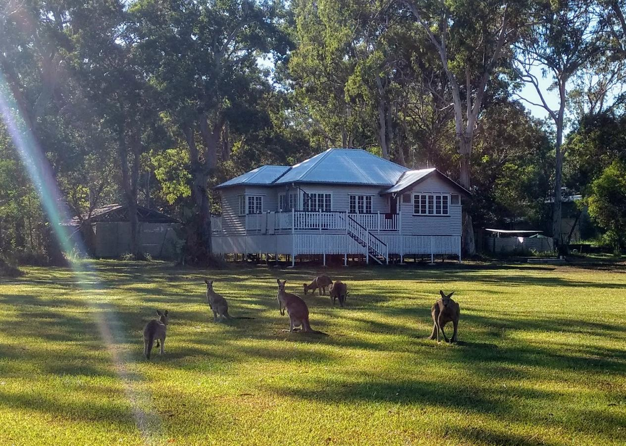 Lake Weyba Noosa Lodge  Kangaroos - Accommodation in Brisbane